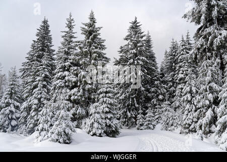 Winter forest in Harz mountains national park, Germany - Stock Photo