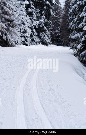 Winter sport scene of cross-country skiing trail (loipe) in Harz Mountains National Park, Germany - Stock Photo