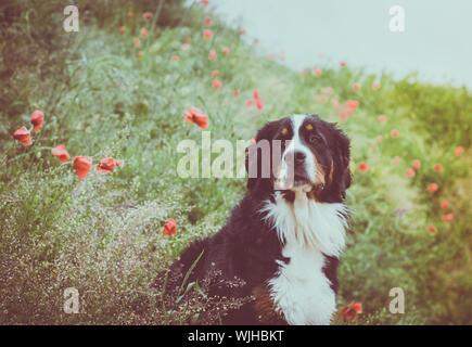 Dog Sitting On Field - Stock Photo