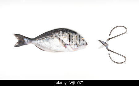 Fresh Dorado fish and vintage scissors isolated on white background. View from above. - Stock Photo