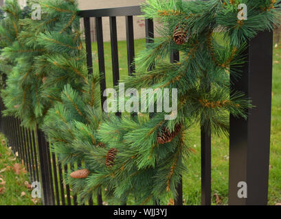 Close-up Of Fresh Green Plants - Stock Photo
