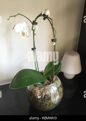 Close-up Of Artificial White Orchid Plant In Vase On Table Against Wall At Home - Stock Photo
