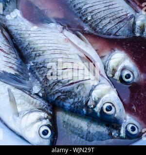 die thai fish in thailand - Stock Photo