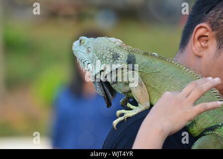 Close-up Of Man With Iguana - Stock Photo