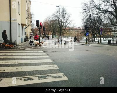 People Walking With Dogs In Street - Stock Photo