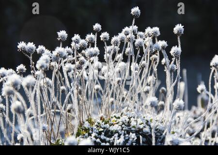 Close-up Of Frosted Flowers On Field - Stock Photo