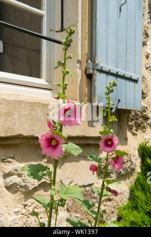 Pink Hollyhock in front of French house with shutters - Stock Photo