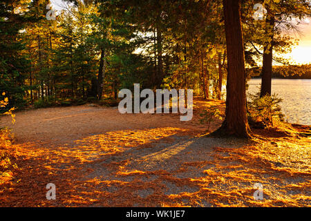 Fall trees and clearing at sunset near Lake of Two Rivers in Algonquin Park, Ontario, Canada - Stock Photo