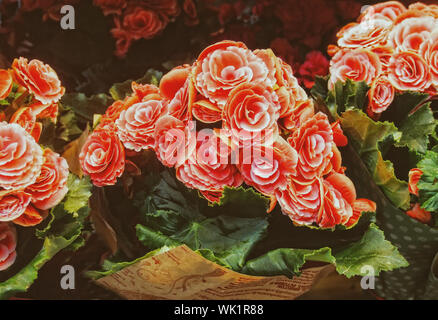 Close-up Of Red Rose Bouquets On Display - Stock Photo