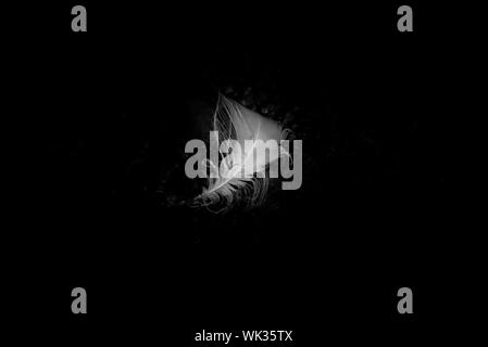Shot Of White Feather Against Black Background - Stock Photo