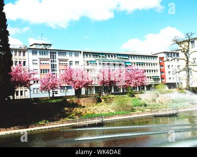 Cherry Blossom Trees In Front Of Building At Riverbank