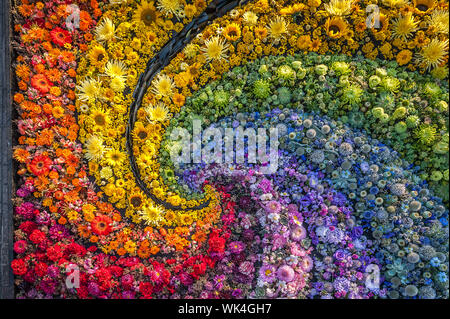 Flowers background. Rainbow carpet of cut flowers. Top view. Holiday background. - Stock Photo