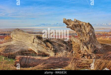 Fallen Tree On Field Against Blue Sky - Stock Photo