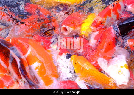 Close-up Of Koi Carps Swimming In Water - Stock Photo