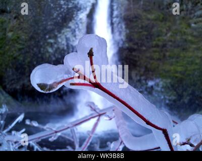 Close-up Of Frozen Twig Against Horsetail Falls - Stock Photo