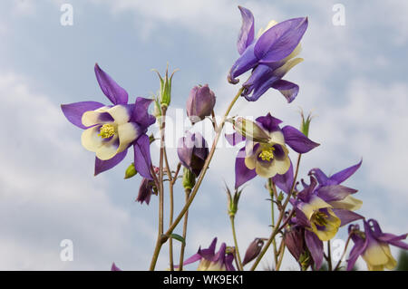 Low Angle View Of Purple Flowering Plants Against Sky - Stock Photo
