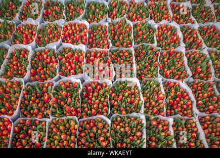 Full Frame Shot Of Tulips For Sale In Market - Stock Photo