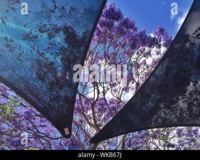 Low Angle View Of Purple Flowering Trees Seen Through Fabrics - Stock Photo