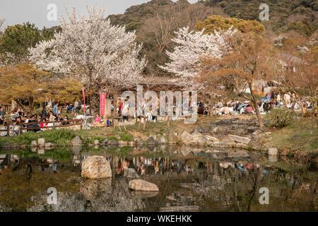 People celebrating the Cherry Blossom season, Maruyama Park, Kyoto, Japan. - Stock Photo