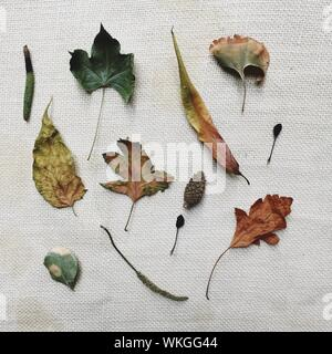 High Angle View Of Various Dried Leaves On Table - Stock Photo