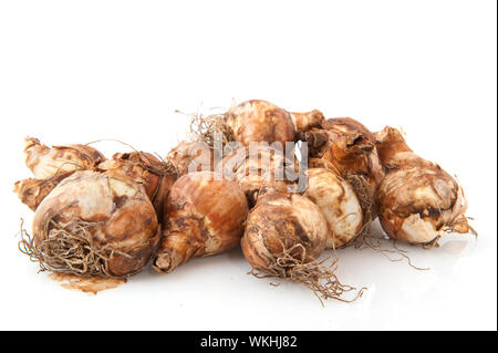 Many Daffodils flower bulbs isolated over white - Stock Photo