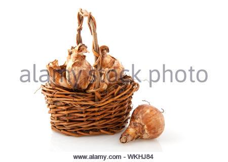 Daffodils flower bulbs in a little basket - Stock Photo