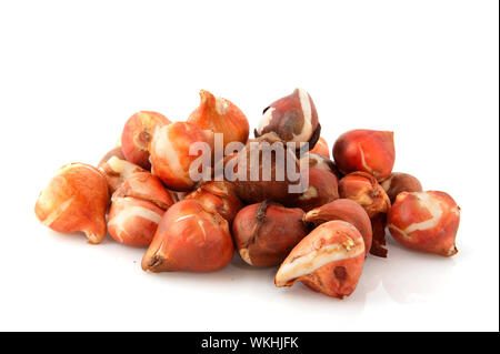 flower bulbs tulips stacked isolated over white - Stock Photo