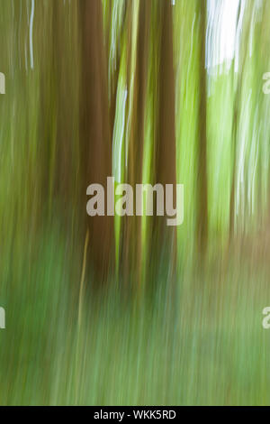 Abstract of blurred trees in green forest - Stock Photo