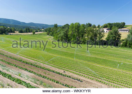 Rows with lettuce and other vegetables in the fields of South France - Stock Photo