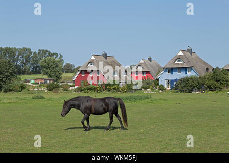 pony and thatched houses, Ahrenshoop, Mecklenburg-West Pomerania, Germany - Stock Photo