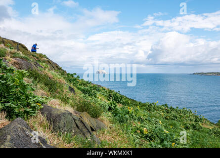 Craigleith Island, Firth of Forth, East Lothian, Scotland, United Kingdom, 4th September 2019. SOS Puffin: A work party of volunteers spends the day on the uninhabited island just off the coast from North Berwick, cutting tree mallow, an invasive non-native species of plant which prevents from create burrows to breed. The project is organised by Scottish Seabird Centre, with volunteers cutting tree mallow to eradicate it. View of Bass Rock in the sunshine - Stock Photo