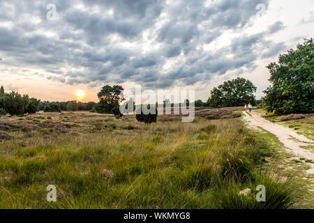 The Westruper Heide, in the nature park Hohe Mark Westmünsterland,   Germany - Stock Photo