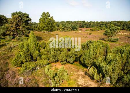 The Westruper Heide, in the nature park Hohe Mark Westmünsterland, near Haltern, Heather blossom,   Germany - Stock Photo
