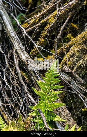 The Westruper Heide, in the Hohe Mark Westmünsterland Nature Park, near Haltern,   Germany - Stock Photo