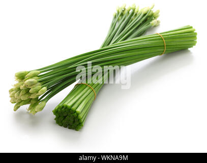 flowering garlic chives isolated on white background - Stock Photo
