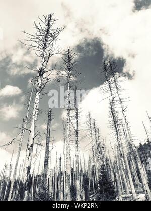 Low Angle View Of Trees In Forest Against Sky - Stock Photo