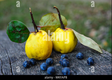 Close-up Of Quinces With Blueberries On Wooden Table - Stock Photo