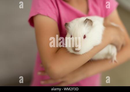 cute white rat in hands vibrant little girl - Stock Photo