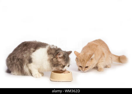 Cats Eating From Bowl Over White Background - Stock Photo