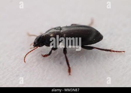 Macro Shot Of Beetle On White Background - Stock Photo