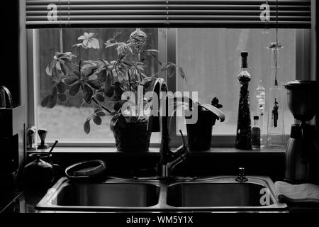 Potted Plants On Window Sill In Kitchen - Stock Photo