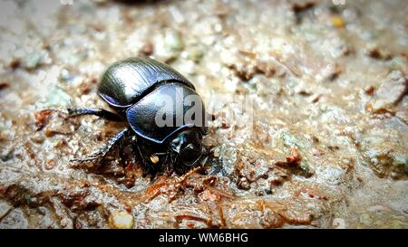 View Of Beetle On Rocks - Stock Photo