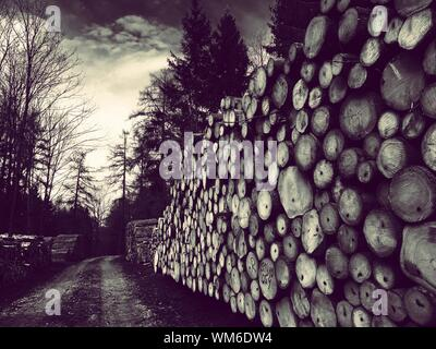 Stack Of Timber By Dirt Road In Forest - Stock Photo
