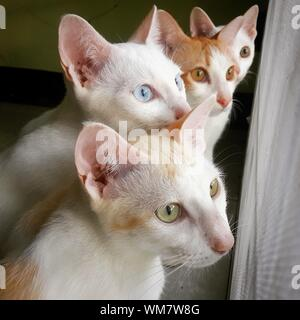Close-up Of Cats - Stock Photo