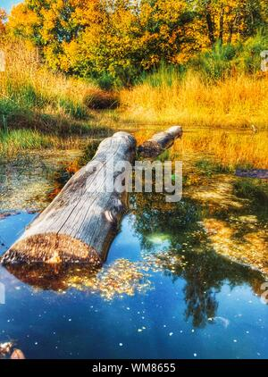 High Angle View Of Log Floating In Pond At Forest - Stock Photo