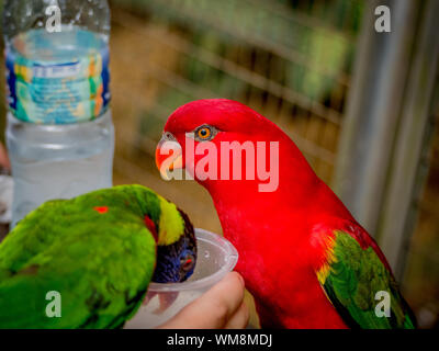 Cropped Image Of Hand Feeding Parakeets In Zoo - Stock Photo