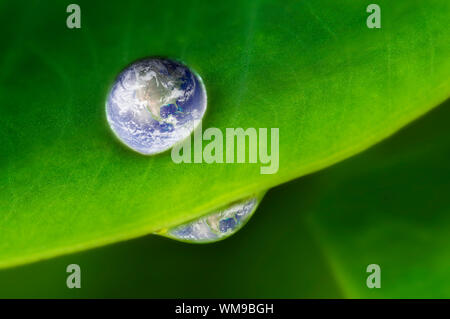Planet earth waterdrop on lotus leaf. Earth picture credit to: http://visibleearth.nasa.gov - Stock Photo