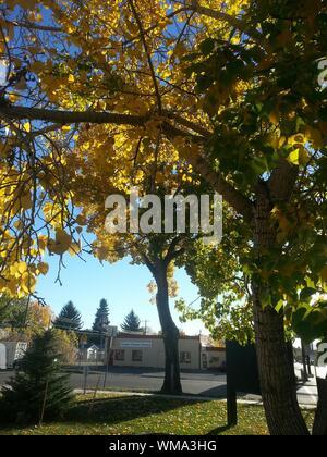 Autumn Trees On Roadside - Stock Photo
