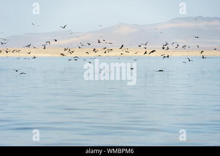 Scenic View Of Birds Flying Over Sea Against Sky - Stock Photo