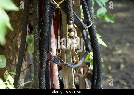 Safety Harnesses Hanging On Tree - Stock Photo